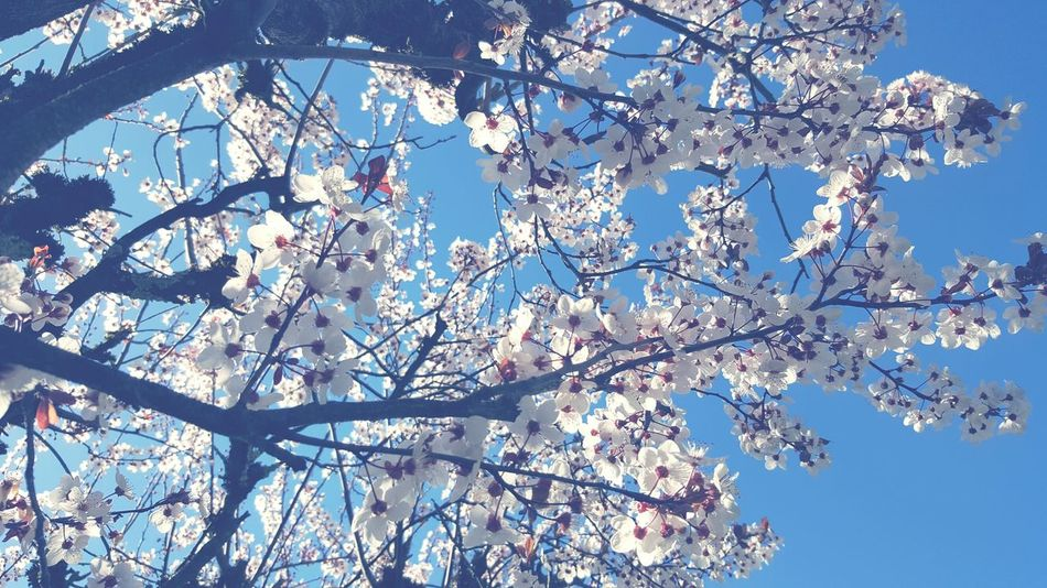 Tree Low Angle View Growth Nature Branch Beauty In Nature Sky No People Day Outdoors Springtime Blossom Close-up Backgrounds Fragility Freshness