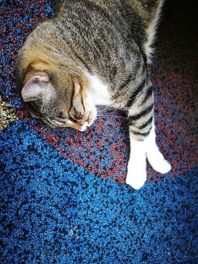 Close-up of animal sleeping on rug
