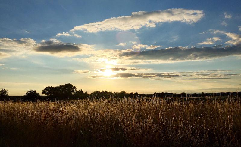 Evening Evening Sun Nature