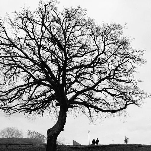 Mood Winter Tree Blackandwhite Bare Tree Branch Silhouette Scenics Tranquil Scene Sky Outdoors Day