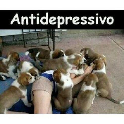Um ótimo remédio! Remedio LittleDogs Cachorrinhos Antidepressivo caezinhos
