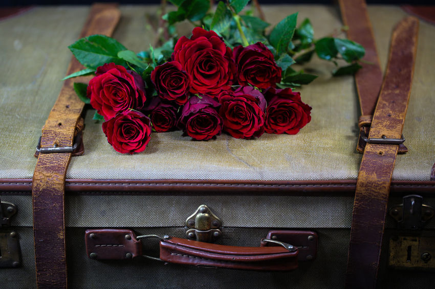 Roses Old Suitcase Flower Rosé Rose - Flower Flowering Plant Plant Table Beauty In Nature Red No People Close-up Indoors  High Angle View Freshness Still Life Nature Wood - Material Focus On Foreground Retro Styled Ribbon Antique Flower Head Bouquet Flower Arrangement Floral Pattern