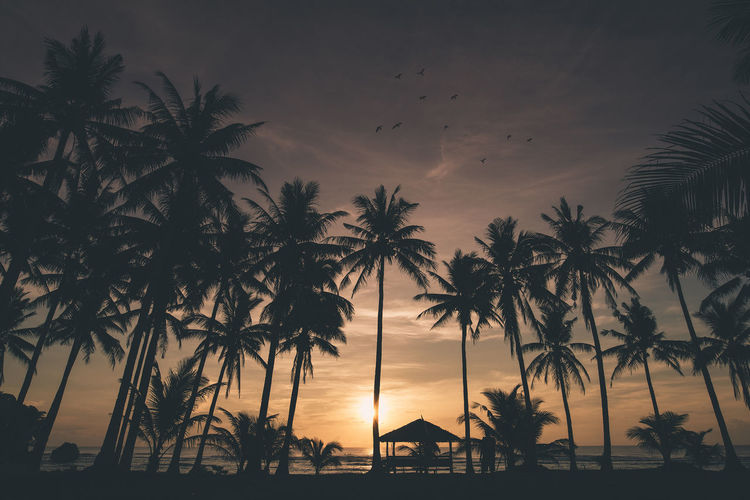 Siargao, Philippines. Landscape_Collection Nature Travel Travel Photography Beach Beauty In Nature Birds Day Growth Horizon Over Water Landscape Landscape_photography Natuer_collection Nature No People Outdoors Palm Tree Scenics Sea Silhouette Sky Sunset Tranquil Scene Tranquility Travel Destinations