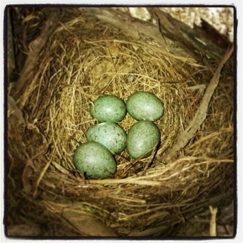 Birdsegg Eggs Bird Amazingnature Nature