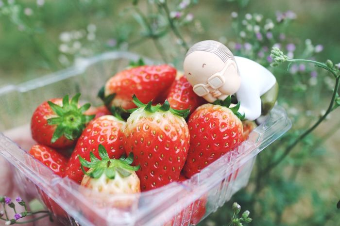Strawberry Thailand Bangkok Toyphotography Gachapon Eosm3 Canon Asian  Ojisan Fruit