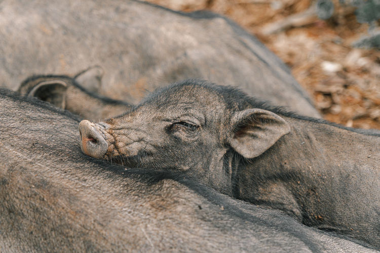 Close-up of a animal resting on rock