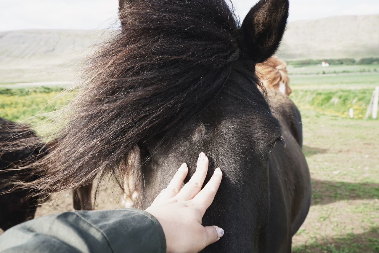 Cropped hand touching horse