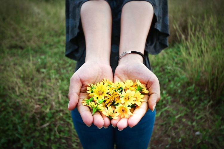 Midsection of person holding yellow flower on field