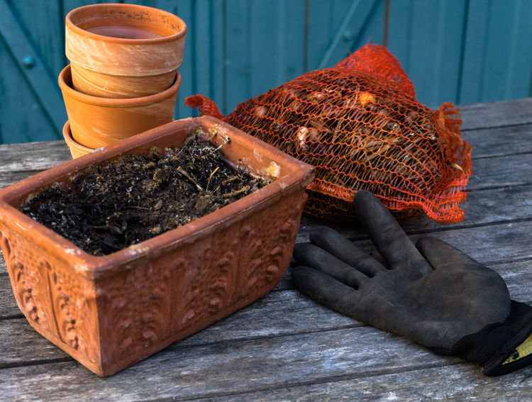 planting time Plant Brown Close-up Container Day Flower Bulbs Focus On Foreground Food Food And Drink Freshness Garden Healthy Eating High Angle View Nature No People Orange Color Outdoors Plant Time Spice Still Life Table Wellbeing Wood - Material