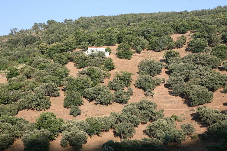 High angle view of trees on landscape against clear sky