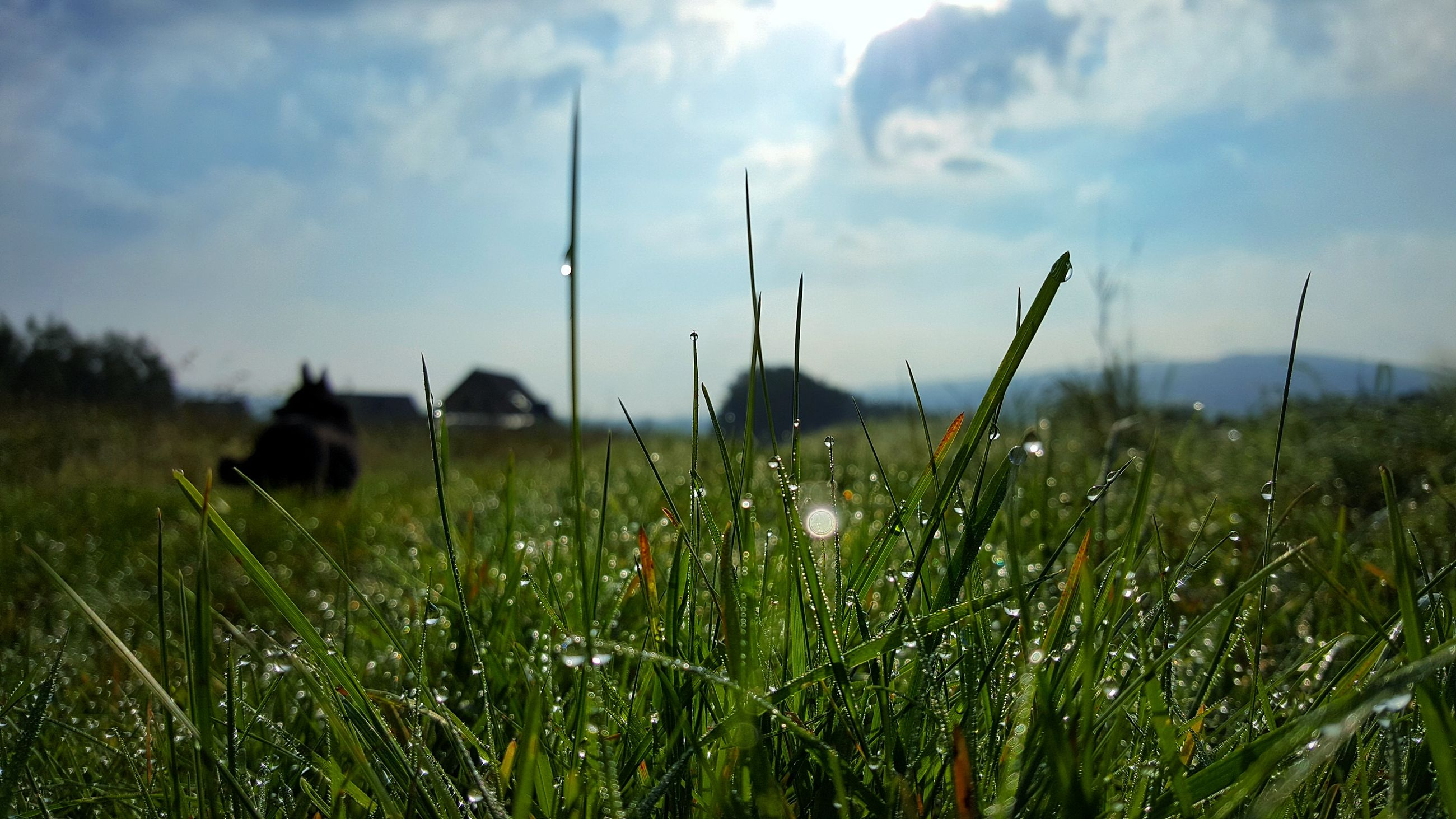 growth, nature, field, grass, sky, no people, plant, tranquility, green color, outdoors, day, beauty in nature, landscape, close-up