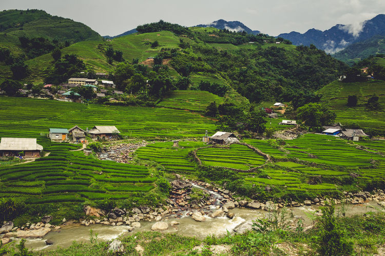Photo was taken in Sapa, Lao Cai in Vietnam. This is the rice field region and it is in the middle of nowhere. Agriculture Animal Themes Architecture Beauty In Nature Building Exterior Day Domestic Animals Field Green Color Growth Landscape Mountain Nature No People Outdoors Rice Paddy Scenics Terraced Field Tranquil Scene Tranquility Tree