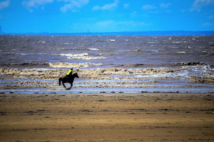 Sky Land Beach Scenics - Nature Sea Nature Beauty In Nature Beach Photography Horizon Over Water Day At The Beach Sand Sea And Sand Leading Lines Blue Sky Space For Text Space For Copy Water Horizon Motion Real People Lifestyles One Person Horse Horse Riding Horse On The Beach