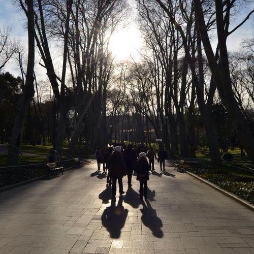 Istanbul Instagram Instakurd Insta_turkey iobjektifimden gulhane park gülhane_parkı gölge photo photography ağaç benimgözümden buhaftabu nikon nikond3100 natural