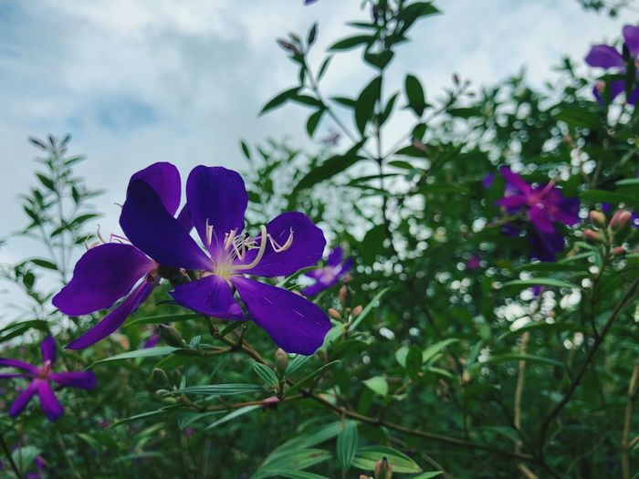 Plant Flowering Plant Flower Beauty In Nature Freshness Growth Purple Petal Close-up Nature Fragility Vulnerability  Flower Head Inflorescence Day No People Plant Part Leaf Focus On Foreground Sky