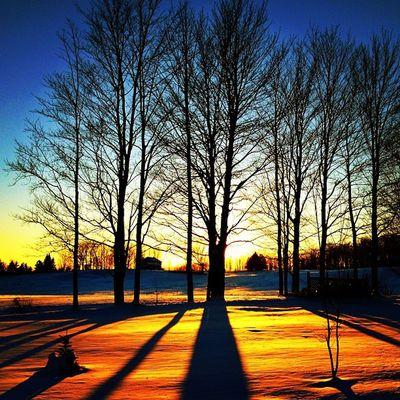 Golden Silhouette. #miltonvt #vt Instagramhub Gmy Sunset Igworldclub Vt Silhouette Vermont_scenery Iphoneonly Insta_america Photooftheday 802 Iphonesia Miltonvt Vermont Instagramvt Golden Igharjit Igersvt Igvermont Bestoftheday Shotaward Captureeuphoria IGDaily Igersnewengland Sunriseporn Nature_lovers