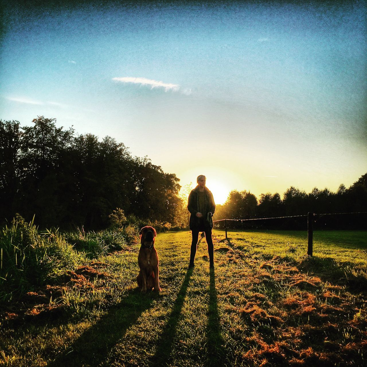tree, field, two people, grass, full length, sunset, silhouette, sky, childhood, real people, outdoors, nature, dog, togetherness, boys, men, day, beauty in nature, people