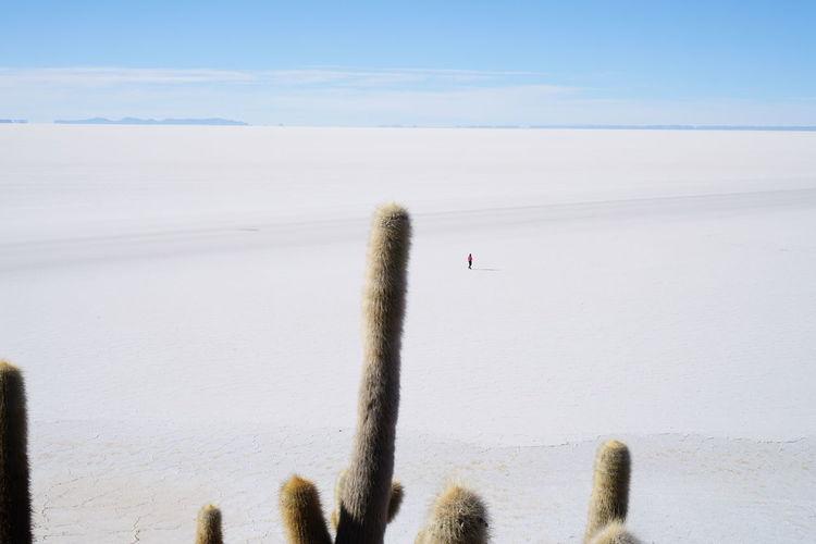 Bolivia Cactus Dakar Bolivia Uyuni Salt Flat Uyuni, Bolivia Isla Del Pescado Salar De Uyuni Uyuni Train Cemetry