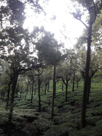 Tranquility No People Nature Freshness Green Color Tea Plantations Slopestyle Outdoors On The Move South India No Filter, No Edit, Just Photography