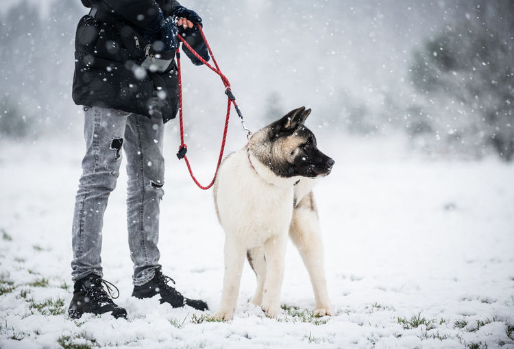 Dog standing on field during winter
