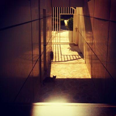 Spot the kitty ? Kitty Cat Instacats Streetcat meow shadow abudhabi albateen uae ♡