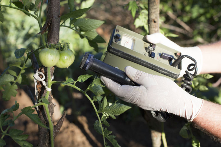 Close-up of man hands holding machine by tomato growing on plant