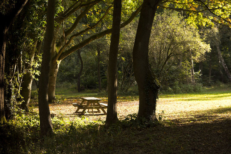 picnic area in the woods Autumn Beauty In Nature Branch Day Freshness Grass Horizontal Landscape Lush - Description Nature No People Outdoors Picnic Picnic Area Picnic Areas Picnic Table Sun Sunlight Sunset Tree