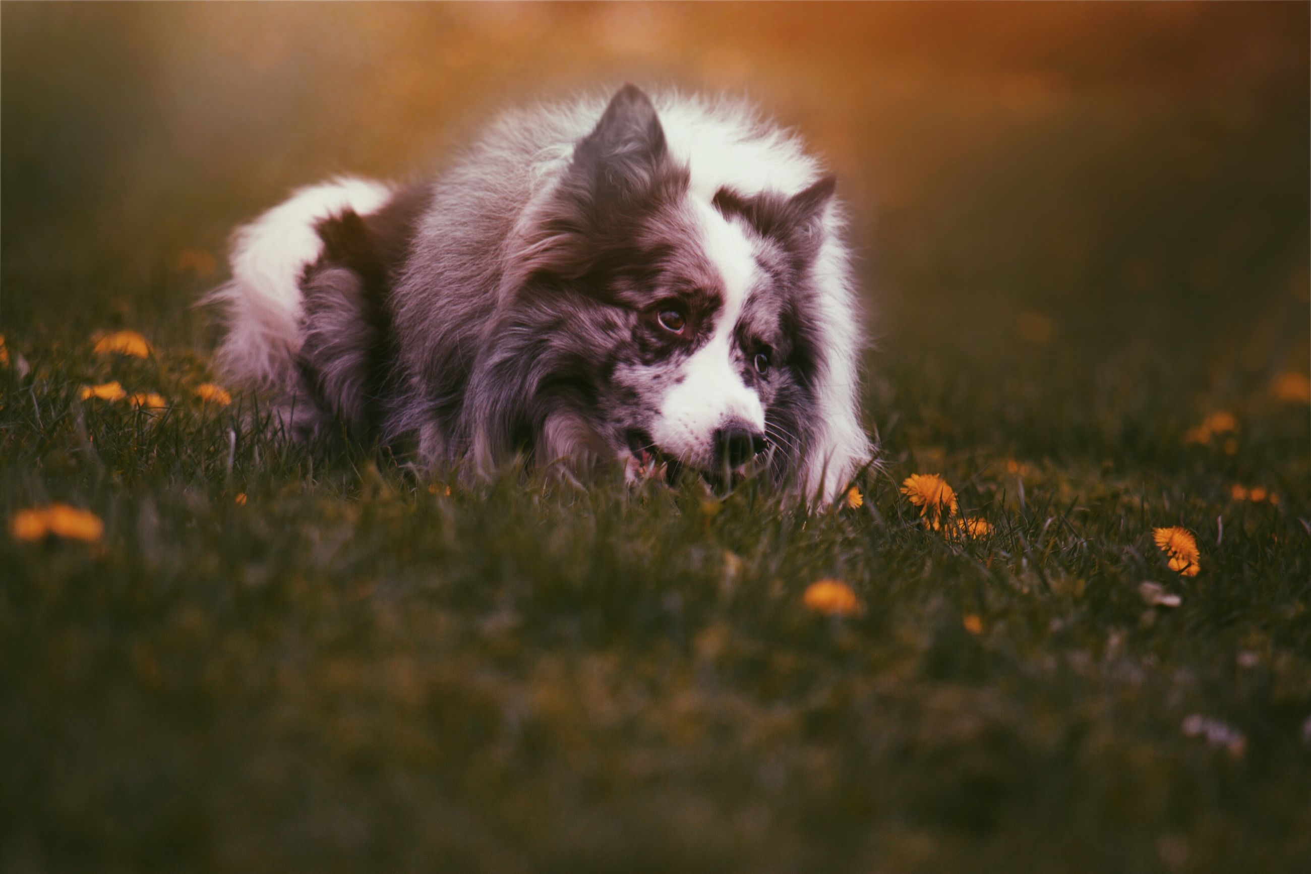 animal themes, one animal, domestic animals, pets, mammal, field, grass, dog, selective focus, grassy, focus on foreground, nature, close-up, no people, outdoors, day, growth, plant, relaxation, young animal