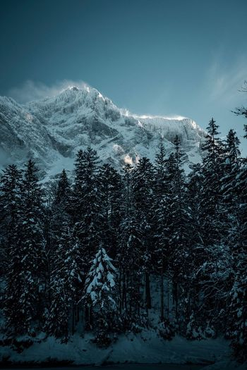 Cold. Snow Winter Cold Temperature Tree Mountain Plant Scenics - Nature Beauty In Nature Sky Nature No People Snowcapped Mountain Forest Tranquility Land Non-urban Scene