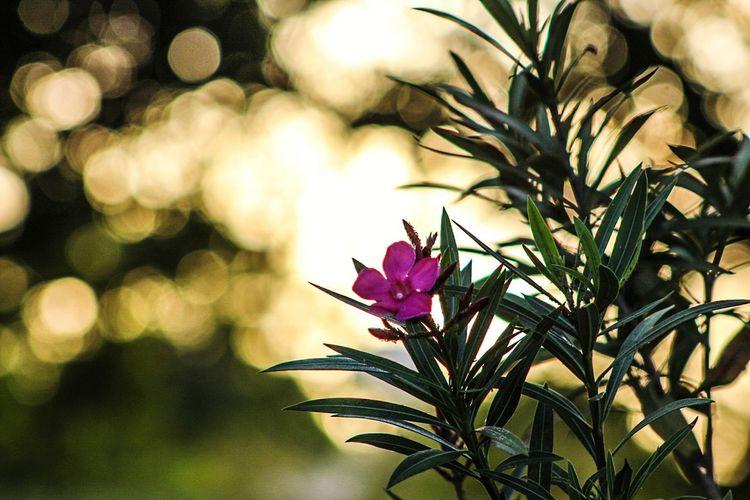 Flower Beauty