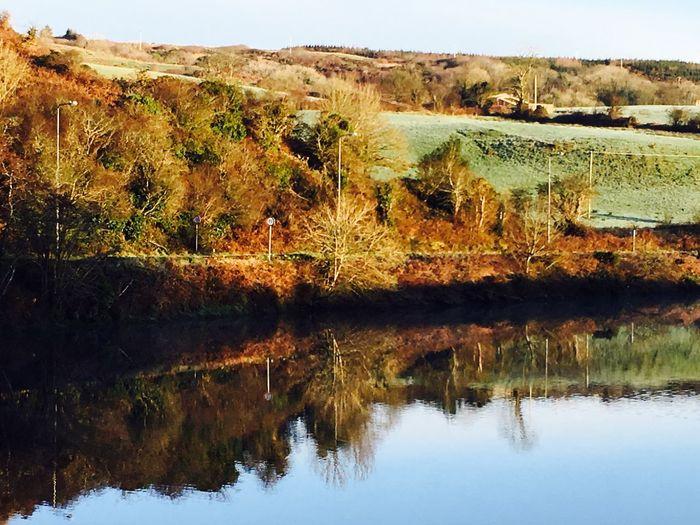 Autumn colours in town Irish Autumn