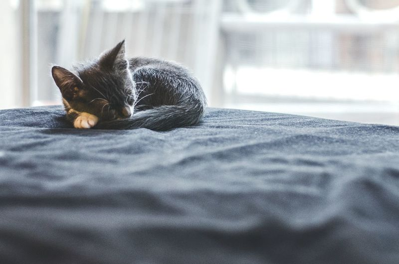 Kitten Relaxing On Bed At Home