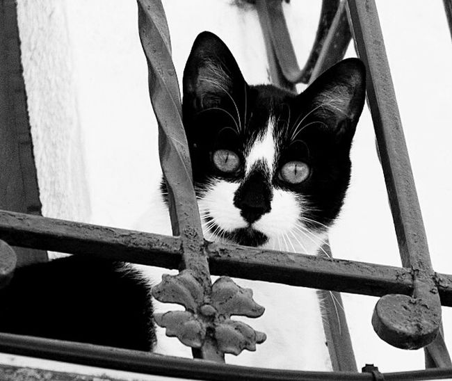 Cat Blackandwhite Bnwphotography Bw_lover