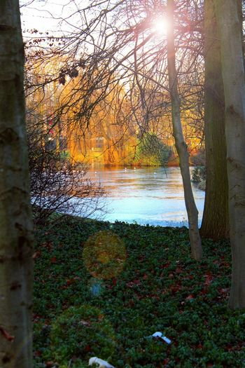 Photo Art The Places I've Been Today Water Reflections Sun Light And Shadow Water At The Park Sun Reflection