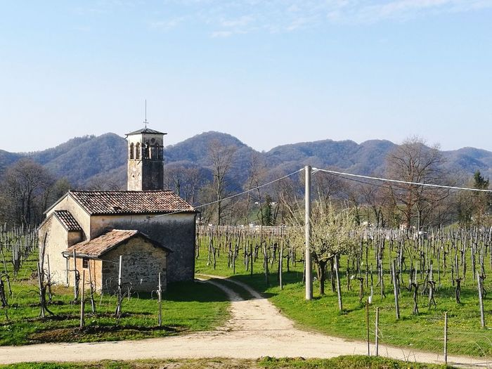 Chiesetta Church Church Architecture Church Buildings Churchyard Landscape Landscape_photography Landscapes Landscape_lovers Landscapelover Chiesa Chiesa Antica Vigna Vigne Wine Wineyard Wineyards Wineyards In Spring Place Of Worship Sky