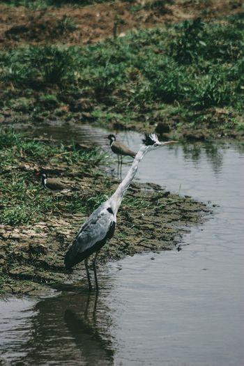 High angle view of gray heron perching on lake