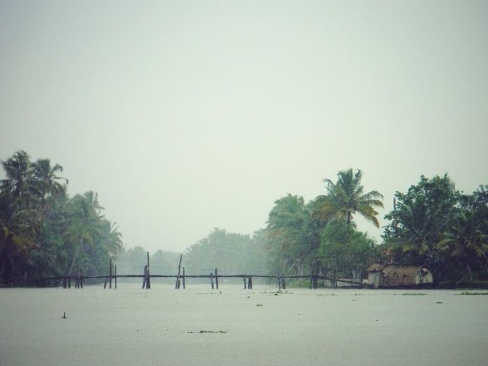 The Backwaters Bridge Over Water Its Raining Coconut Trees The Great Outdoors - 2016 EyeEm Awards