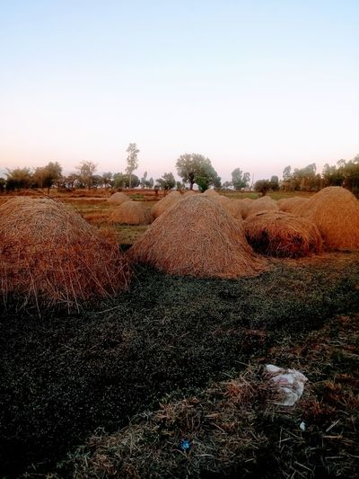 Hay bales on field against clear sky
