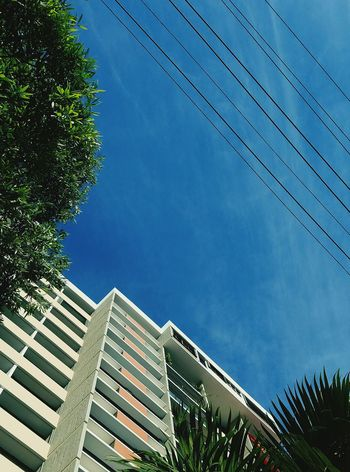 Built Structure Tree Sky Architecture Shapes , Lines , Forms & Composition Still Life Perspective Open Edit Minimalist Architecture Pattern, Texture, Shape And Form Minimalism Lines And Angles San Juan PR Building Exterior Blue Rule Of Thirds