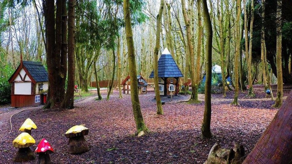 EyeEm Gallery Tree Trunk Mushroom Fairytale  Small Houses In Big Places Outdoors Fun Day