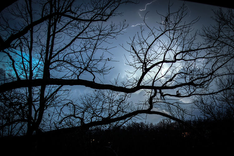 Tree Silhouette Sky Nature No People Branch Bare Tree Beauty In Nature Outdoors Tranquility Low Angle View Night Storm Storm Approaching Lightning Lightning Storm Stormy Night