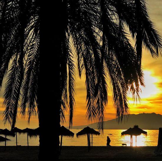 Tree Silhouette Palm Tree Water Sunset Beach Sea