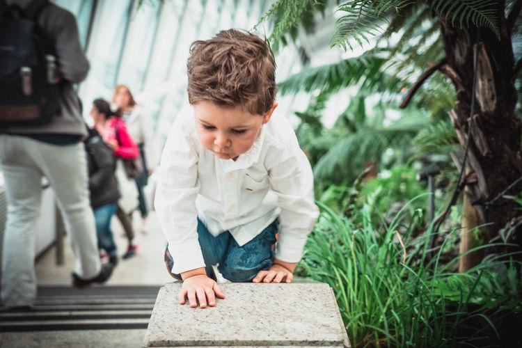 Boy crawling on retaining wall by plants