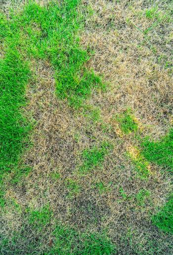 Grass texture,