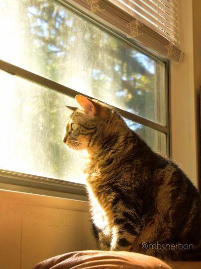 Finding Beauty Eye4photography  Portrait Everyday Joy Animals Cat Natural Light Feline Pets Pet Portrait