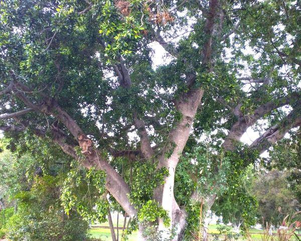 Tree Trees