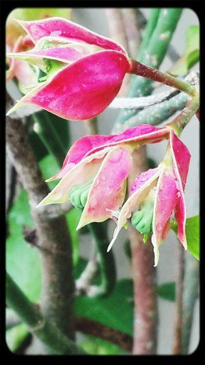 Beautiful Flowers Mizz Nunuy Flora Eye Em Nature Lover