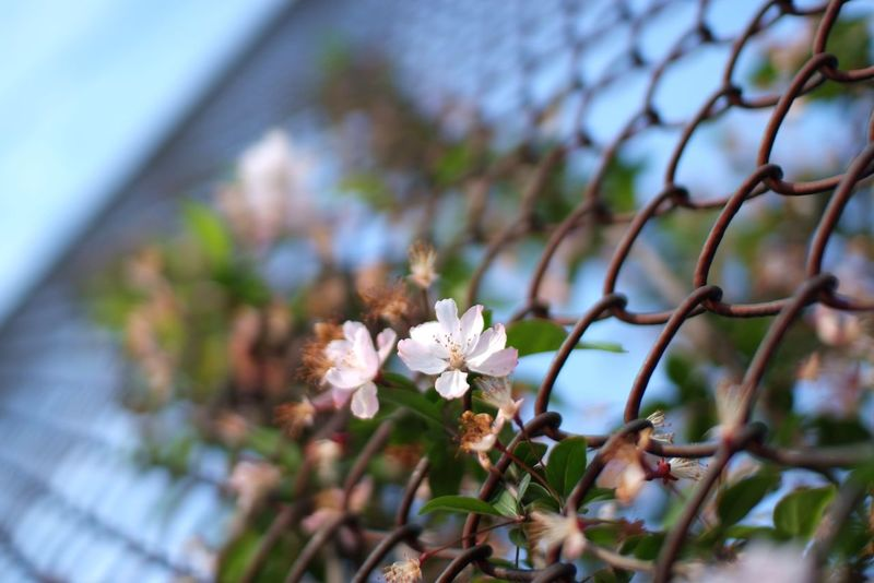 Life City Street Photography Plant Plants Springtime Flower Flowers Spring Flowers Sky