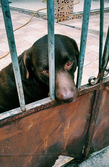 I'm a sad, sad dog. Dog ULTRAVIOLENCE Conceitual Taking Photos