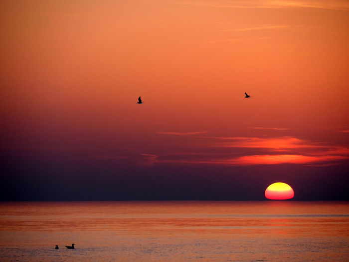 Sylt Germany The Great Outdoors - 2018 EyeEm Awards Animal Animal Themes Animal Wildlife Animals In The Wild Beauty In Nature Bird Horizon Over Water Idyllic No People Nordsee Orange Color Scenics - Nature Sea Seagull Sky Sun Sunset Sylt Sylt_collection Tranquil Scene Tranquility Water